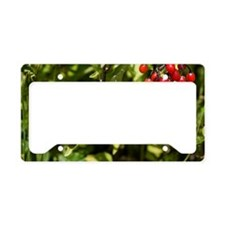 Bittersweet berries (Solanum  License Plate Holder