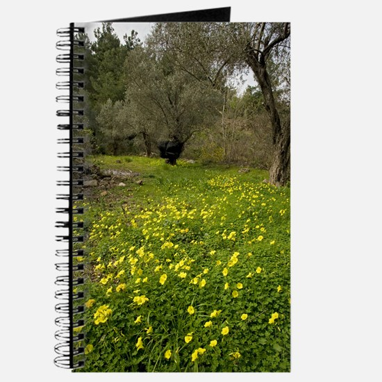 Bermuda buttercup (Oxalis pes-caprae) Journal