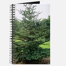 Bhutan fir (Abies densa) Journal