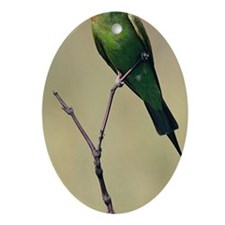 Blue-cheeked bee-eater, breeding, So Oval Ornament