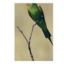 Blue-cheeked bee-eater, b Postcards (Package of 8)