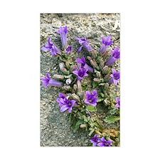 Bellflower (Campanula topalian Decal
