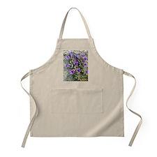 Bellflower (Campanula topaliana) Apron