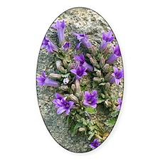 Bellflower (Campanula topaliana) Decal