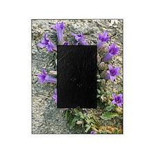Bellflower (Campanula topaliana) Picture Frame
