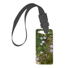 Aphyllanthes monspeliensis Luggage Tag