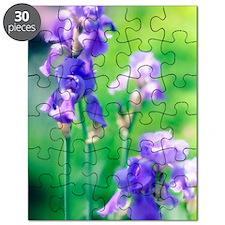 Bearded iris (Iris germanica) Puzzle