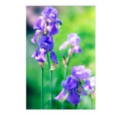 Bearded iris (Iris german Postcards (Package of 8)