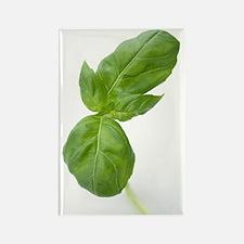 Basil leaves Rectangle Magnet
