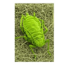 Aphid on a leaf, SEM Postcards (Package of 8)