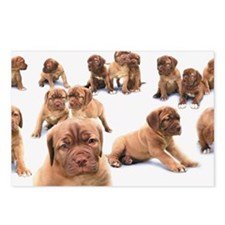 Bull Mastiff puppies Postcards (Package of 8)