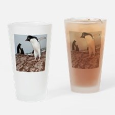 Adelie penguin colony Drinking Glass