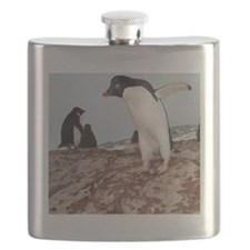 Adelie penguin colony Flask
