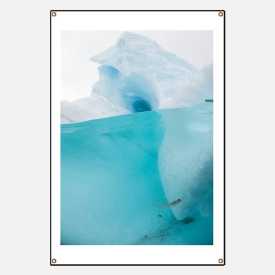 Antarctic iceberg with krill, split view Banner