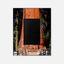 Base of Giant Sequoia 'General Sherm Picture Frame