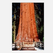 Base of Giant Sequoia 'Ge Postcards (Package of 8)