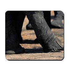 Elephant (Loxodonta africana), legs and  Mousepad