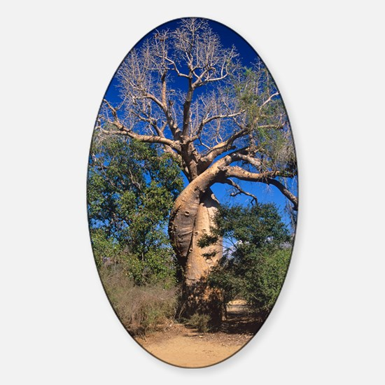 Baobab tree Sticker (Oval)