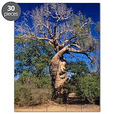 Baobab tree Puzzle