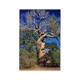 Baobab Magnets