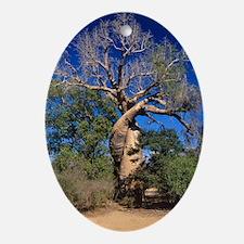 Baobab tree Oval Ornament