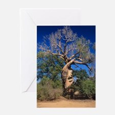 Baobab tree Greeting Card