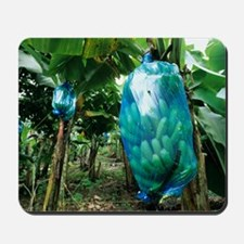 Banana tree Mousepad