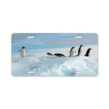 Adelie penguins Aluminum License Plate