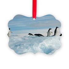 Adelie penguins Ornament
