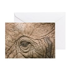 African elephant eye and skin Greeting Card