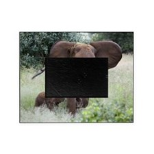 African elephants Picture Frame