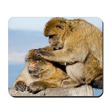 Barbary macaques Mousepad