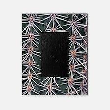 Barrel cactus spines (Ferocactus sp. Picture Frame
