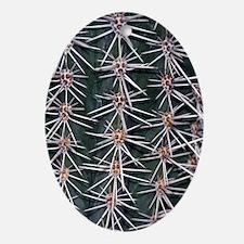 Barrel cactus spines (Ferocactus sp. Oval Ornament