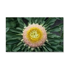 Aster Car Magnet 20 x 12