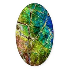Amphibole mineral, light micrograph Decal
