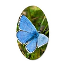 Adonis Blue butterfly Wall Decal