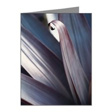 a flower petal begins to cur Note Cards (Pk of 20)