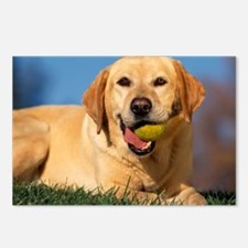 Labrador with tennis ball Postcards (Package of 8)