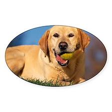 Labrador with tennis ball Decal