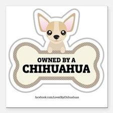 "Owned by a Chihuahua Square Car Magnet 3"" x 3"""