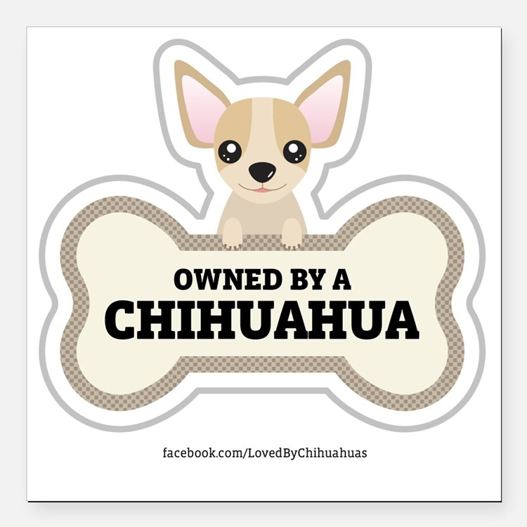 """Owned by a Chihuahua Square Car Magnet 3"""" x 3"""""""