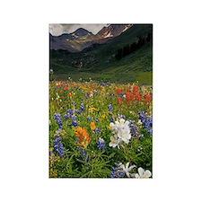 Alpine flowers in Rustler's Gulch Rectangle Magnet