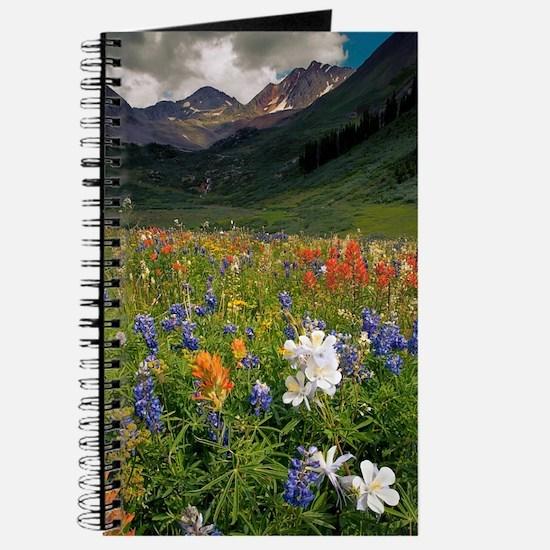 Alpine flowers in Rustler's Gulch Journal