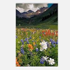 Alpine flowers in Rustler Postcards (Package of 8)