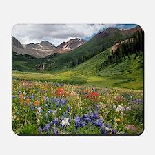 Alpine flowers in Rustler's Gulch Mousepad