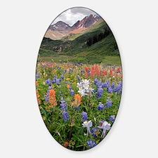 Alpine flowers in Rustler's Gulch Decal