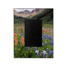 Alpine flowers in Rustler's Gulch Picture Frame
