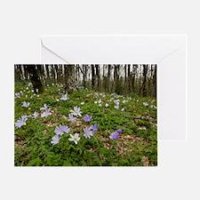 Anemone apennina Greeting Card