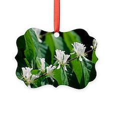 Amur honeysuckle flowers (Lonicer Ornament